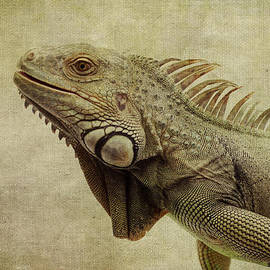 Marina Kojukhova - Iguana