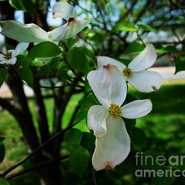 Luther   Fine Art - Illinois Capitol Dogwood