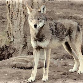 Athena Mckinzie - Illusion Of A Wolf