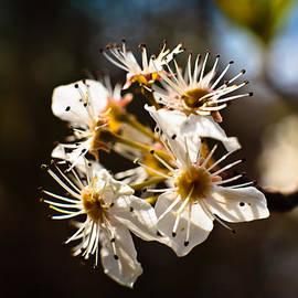 David Bachman - Image 97 Budding Flower