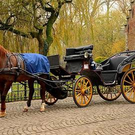 Imran Ahmed - Immaculate horse and carriage