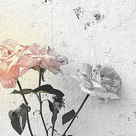 Kathy Barney - Imperfect Roses15 Softer Focal