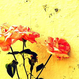 Kathy Barney - Imperfect 8 Hello Yellow Roses