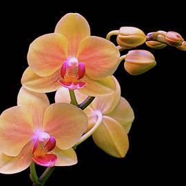 Rona Black - In Bloom