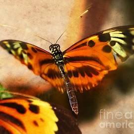 Peggy  Franz - In Flight Butterfly