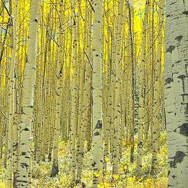 Steve Luther - In Golden Forest