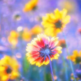 Douglas MooreZart - In summer the song sings itself