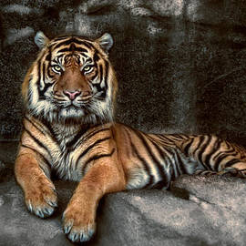 Joachim G Pinkawa - In The Eyes Of The Tiger