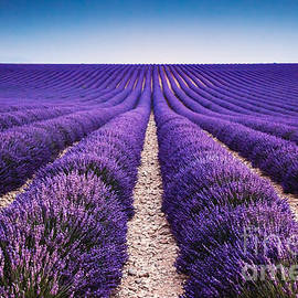 Matteo Colombo - In the lavender