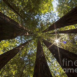 Natural Focal Point Photography - In The Presence of Giants