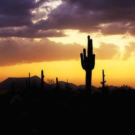 Saija  Lehtonen - In the Shadows of the Saguaro