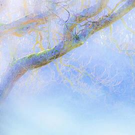 Hal Halli - In Winter