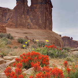 Duncan Mackie - Indian Paintbrush and the Three Gossips