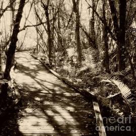 John Harmon - Infrared Photo Collier-Seminole Florida State Park