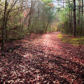Karen Wiles - INHALE the FOREST