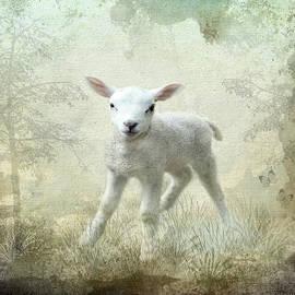 Annie  Snel - Innocent