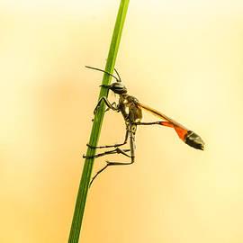 Attila Simon - Insect