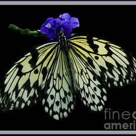 Inspired Nature Photography By Shelley Myke - Inspired by Butterflies