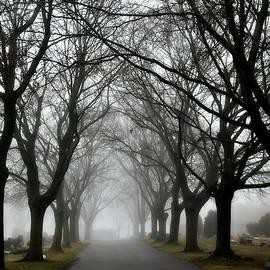 Rebecca Frank - Into The Fog