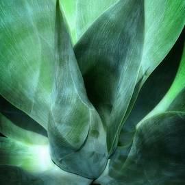 Joseph J Stevens - Into the Green
