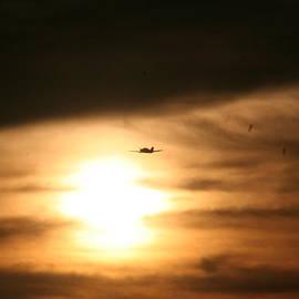 David S Reynolds - Into The Sun