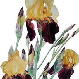 Greta Corens - Iris Beethoven Romance in Fa major