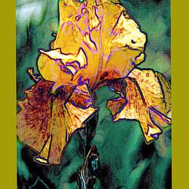 ImagesAsArt Photos And Graphics - Iris Bloom Digital Photo Art