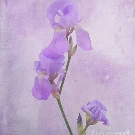 Scott Cameron - Iris Bouquet