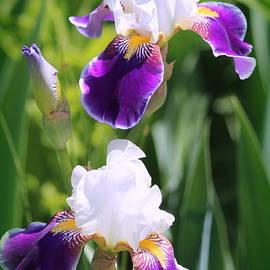 Rosanne Jordan - Iris Duet of Beauty
