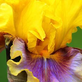 Regina Geoghan - Iris-In Living Color