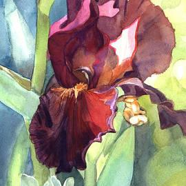Greta Corens - Iris in Red and Burgundy