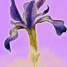 Barbie Corbett-Newmin - Iris on lilac