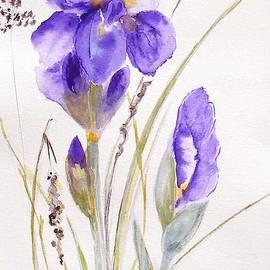 Sibby S - Iris
