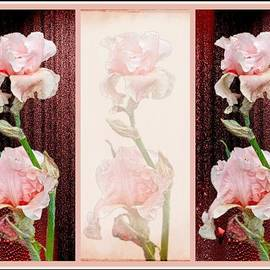 Mother Nature - Irises in Pink With Red
