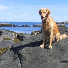 Elizabeth Dow - Island Dog