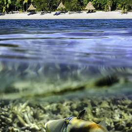 Darren Patterson - Island Life