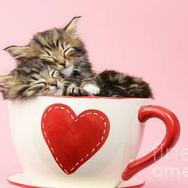 Greg Cuddiford - It Must Be Love