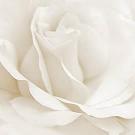 Jennie Marie Schell - Ivory Ballerina Rose Flower