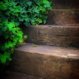 Steve Hurt - Ivy Beside Steps