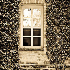 Colleen Kammerer - Ivy Windows in Sepia - Princeton University