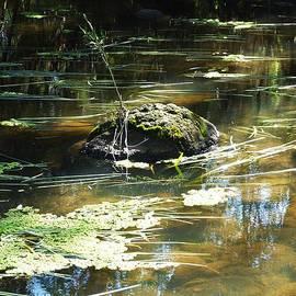 Michaela Perryman - Jackson Creek Rock