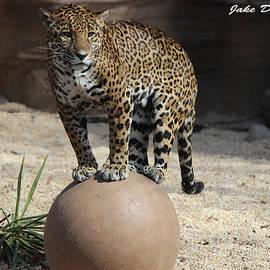 Jake Danishevsky - Jaguar On The Ball