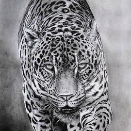 Ian Cuming - Jaguar_Yaguarete