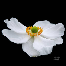 Julie Palencia - Japanese Anemone Squared