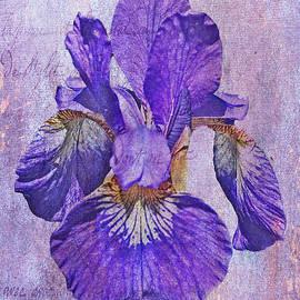 Mother Nature - Japanese Iris - Born Of The Purple