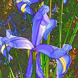 Douglas MooreZart - Japanese Iris
