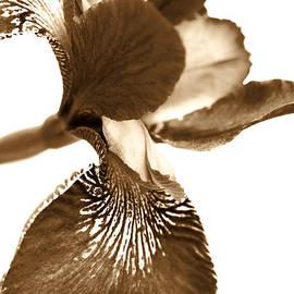 Jennie Marie Schell - Japanese Iris Flower Sepia Brown