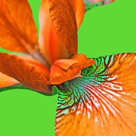 Jennie Marie Schell - Japanese Iris Orange Lime Green Five
