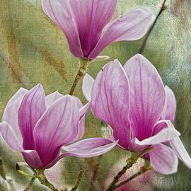 Bonnie Barry - Japanese Magnolias at Avery Island