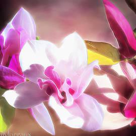rdm-Margaux Dreamations - Japanese Mulan Magnolia 1